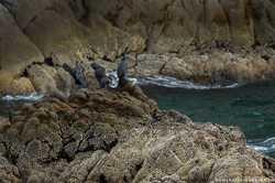 птицы на острове Старичков