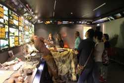 выставка в музее вулканов на Камчатке