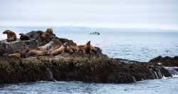 Морские туры и экскурсии на Камчатке